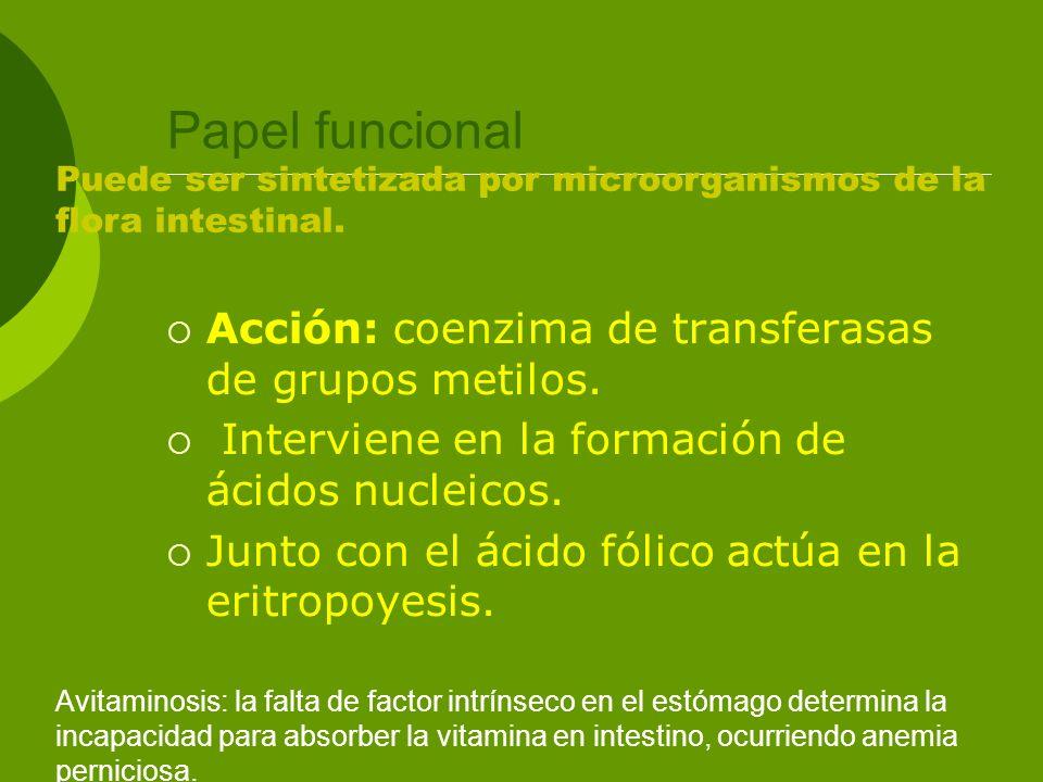 Papel funcional Acción: coenzima de transferasas de grupos metilos. Interviene en la formación de ácidos nucleicos. Junto con el ácido fólico actúa en