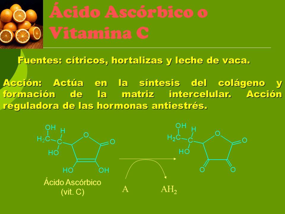 AAH 2 Ácido Ascórbico (vit. C) Ácido Ascórbico o Vitamina C Fuentes: cítricos, hortalizas y leche de vaca. Acción: Actúa en la síntesis del colágeno y