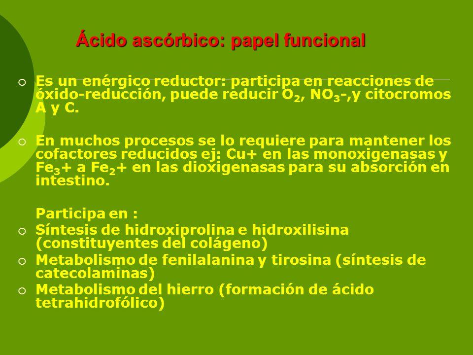Ácido ascórbico: papel funcional Es un enérgico reductor: participa en reacciones de óxido-reducción, puede reducir O 2, NO 3 -,y citocromos A y C. En