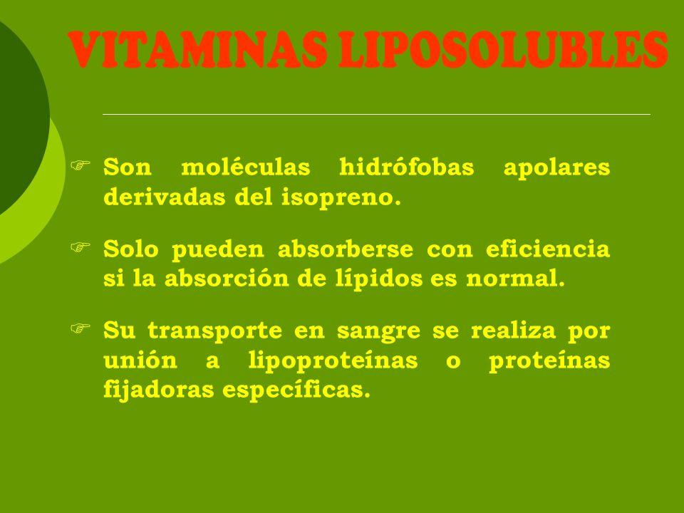 Son moléculas hidrófobas apolares derivadas del isopreno. Solo pueden absorberse con eficiencia si la absorción de lípidos es normal. Su transporte en