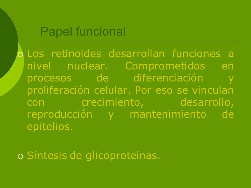 Papel funcional Los retinoides desarrollan funciones a nivel nuclear. Comprometidos en procesos de diferenciación y proliferación celular. Por eso se