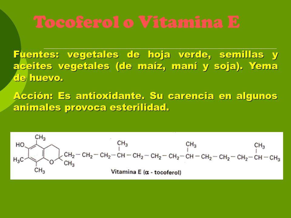 Tocoferol o Vitamina E Fuentes: vegetales de hoja verde, semillas y aceites vegetales (de maíz, maní y soja). Yema de huevo. Acción: Es antioxidante.