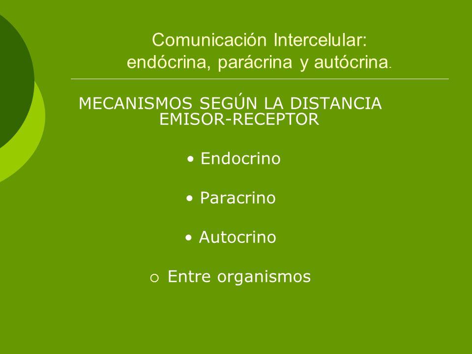 Comunicación Intercelular: endócrina, parácrina y autócrina. MECANISMOS SEGÚN LA DISTANCIA EMISOR-RECEPTOR Endocrino Paracrino Autocrino Entre organis