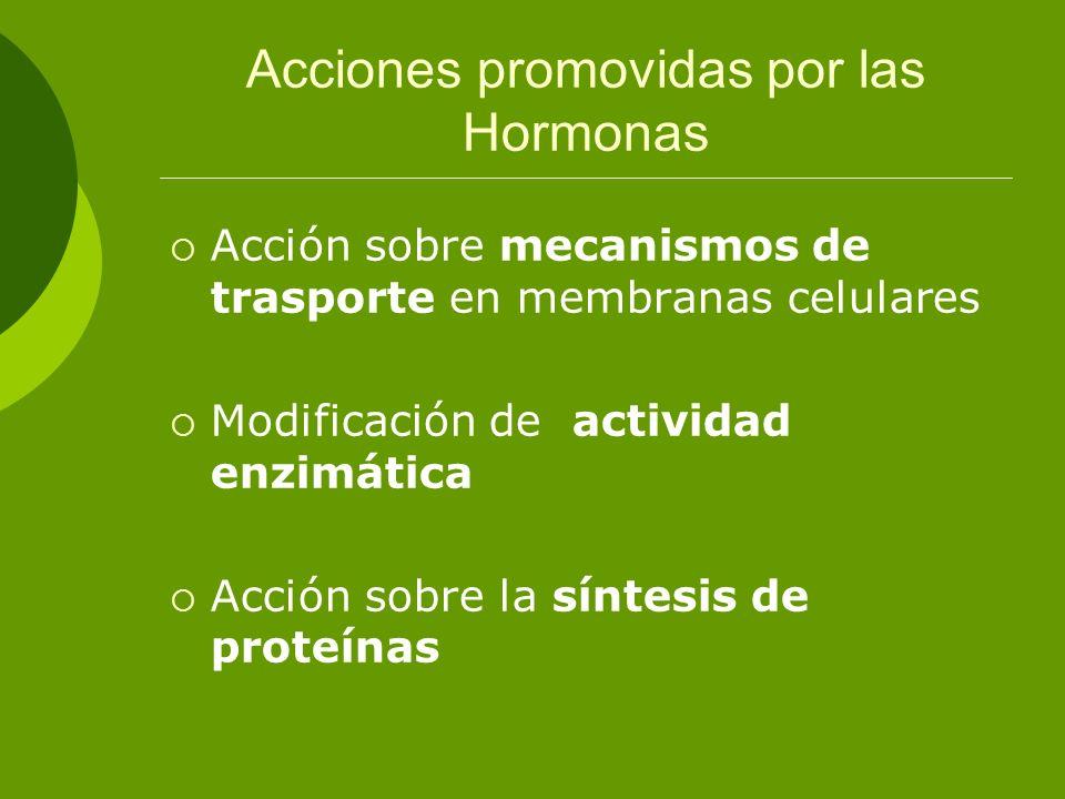 Acciones promovidas por las Hormonas Acción sobre mecanismos de trasporte en membranas celulares Modificación de actividad enzimática Acción sobre la