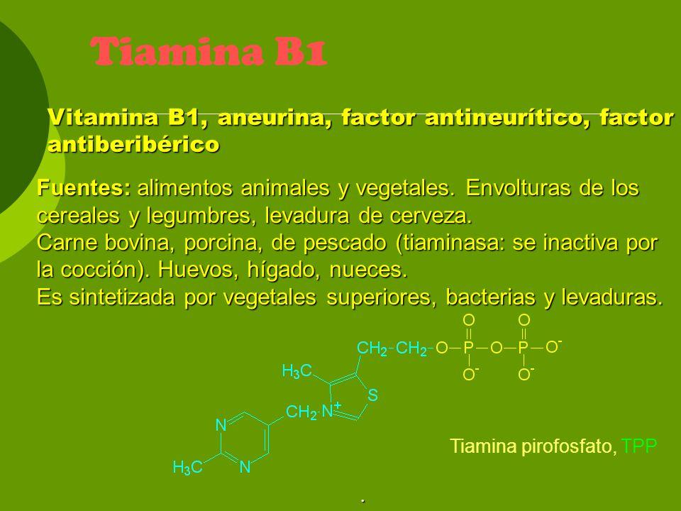 Biotina (B8) – papel funcional Coenz.