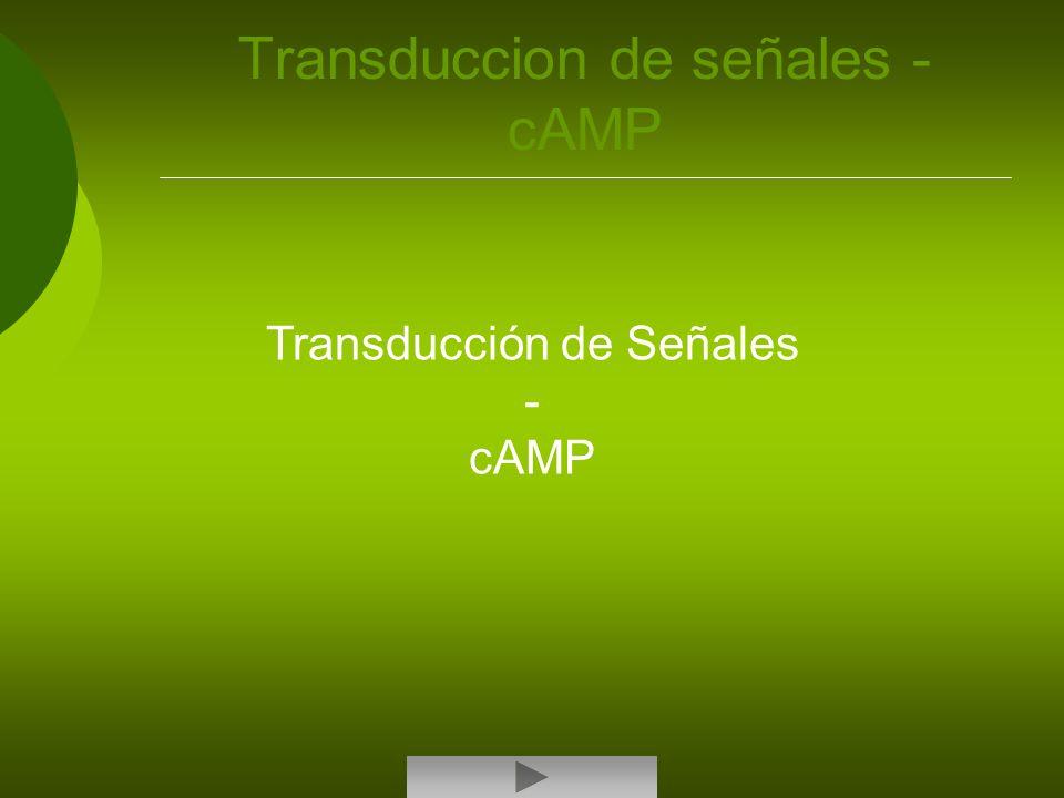 Transduccion de señales - cAMP Transducción de Señales - cAMP
