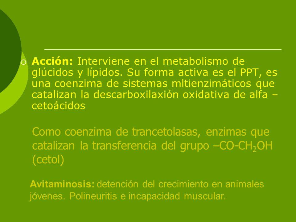 Acción: Interviene en el metabolismo de glúcidos y lípidos. Su forma activa es el PPT, es una coenzima de sistemas mltienzimáticos que catalizan la de