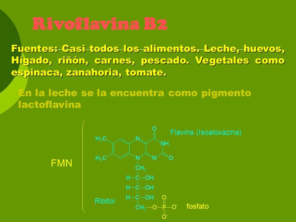Rivoflavina B2 Fuentes: Casi todos los alimentos. Leche, huevos, Hígado, riñón, carnes, pescado. Vegetales como espinaca, zanahoria, tomate. Flavina (