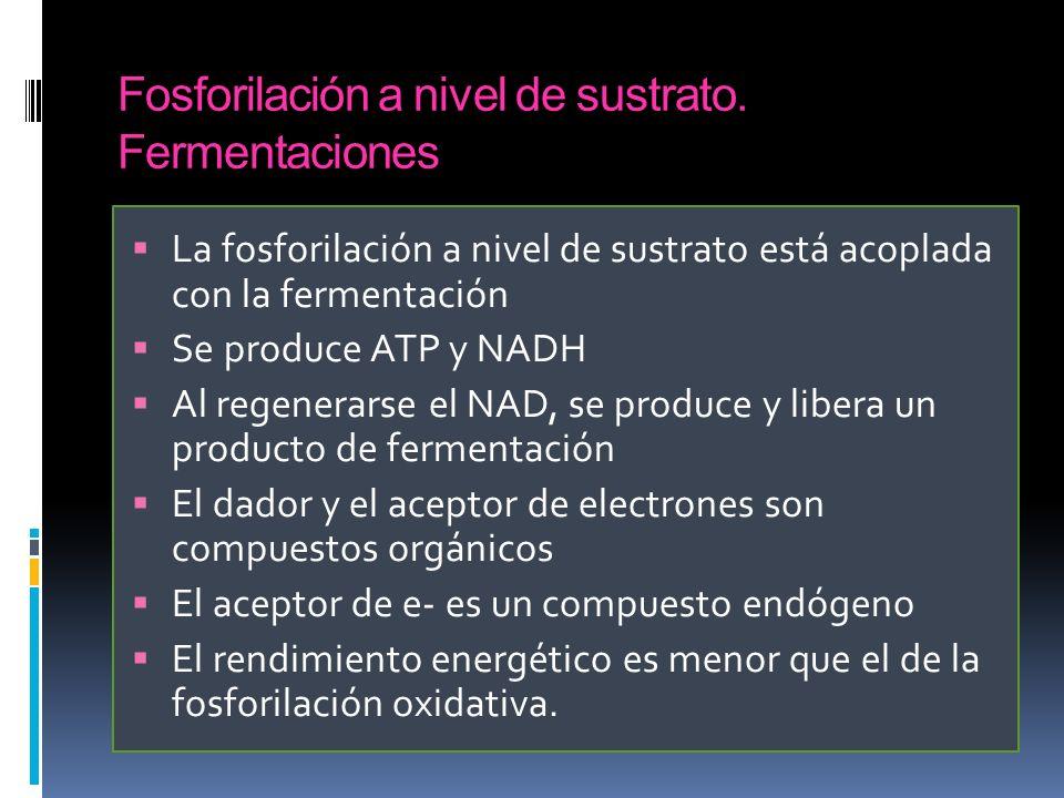 Fosforilación a nivel de sustrato. Fermentaciones La fosforilación a nivel de sustrato está acoplada con la fermentación Se produce ATP y NADH Al rege