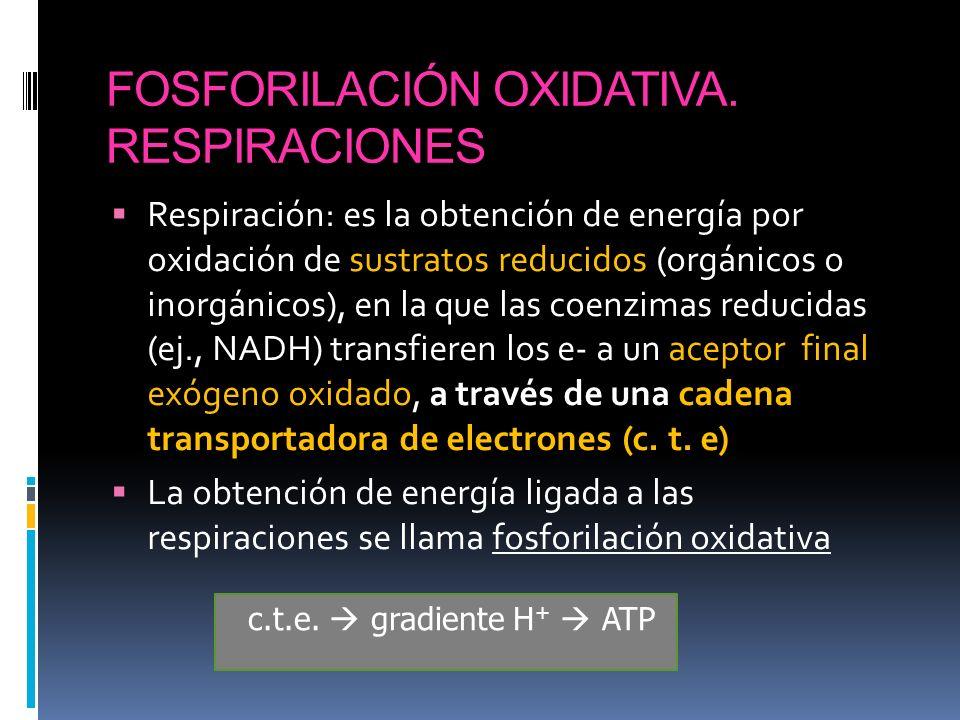 FOSFORILACIÓN OXIDATIVA. RESPIRACIONES Respiración: es la obtención de energía por oxidación de sustratos reducidos (orgánicos o inorgánicos), en la q