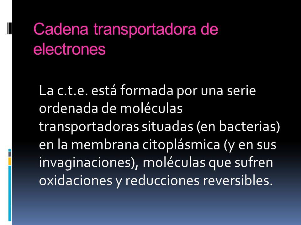Cadena transportadora de electrones La c.t.e. está formada por una serie ordenada de moléculas transportadoras situadas (en bacterias) en la membrana