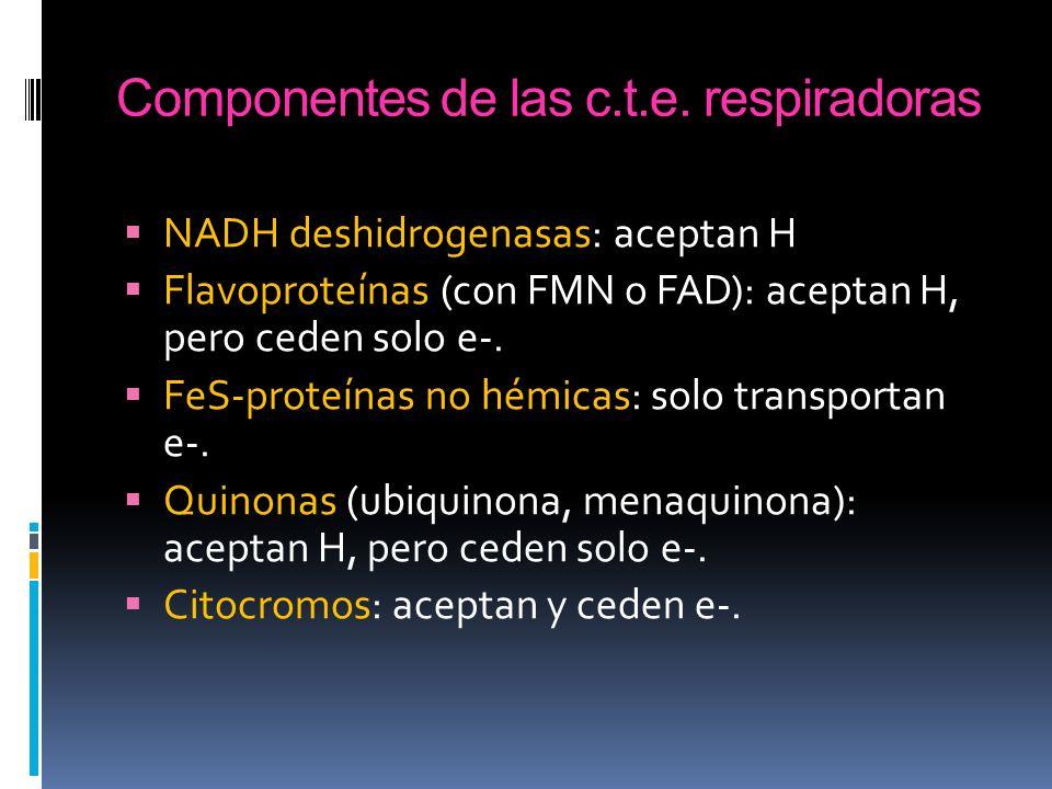 Componentes de las c.t.e. respiradoras NADH deshidrogenasas: aceptan H Flavoproteínas (con FMN o FAD): aceptan H, pero ceden solo e-. FeS-proteínas no