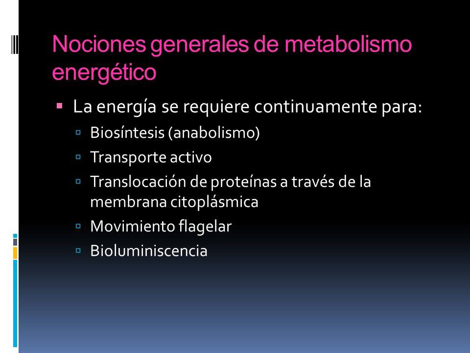 Nociones generales de metabolismo energético La energía se requiere continuamente para: Biosíntesis (anabolismo) Transporte activo Translocación de pr