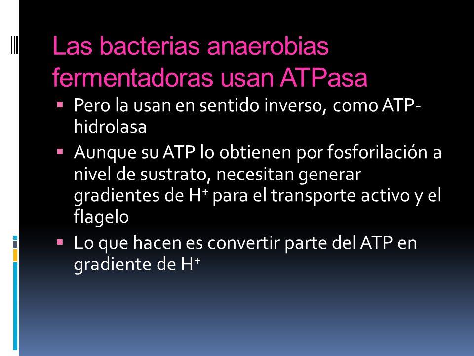 Las bacterias anaerobias fermentadoras usan ATPasa Pero la usan en sentido inverso, como ATP- hidrolasa Aunque su ATP lo obtienen por fosforilación a