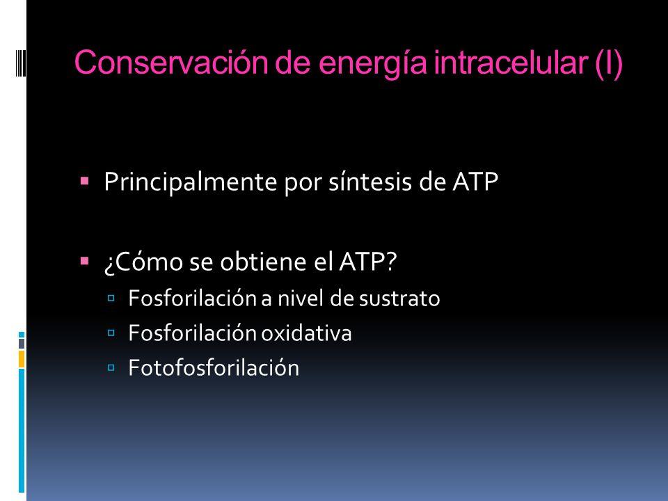 Conservación de energía intracelular (II) En todas las fosforilaciones energéticas hay reacciones redox exergónicas: Se libera energía libre Una reacción redox exergónica se puede acoplar a la obtención de trabajo útil: Formación de un compuesto rico en energía Formación de un gradiente de concentración y/o de carga eléctrica a ambos lados de la membrana En ambos casos, el trabajo se puede convertir finalmente en ATP