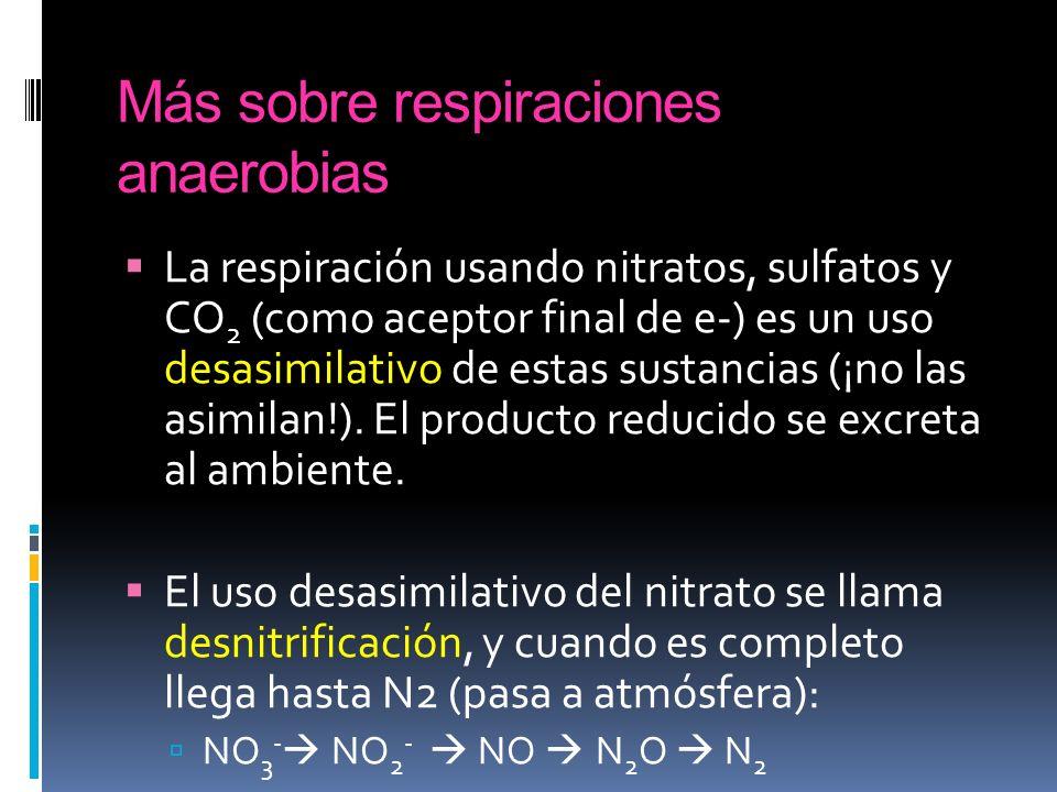 Más sobre respiraciones anaerobias La respiración usando nitratos, sulfatos y CO 2 (como aceptor final de e-) es un uso desasimilativo de estas sustan