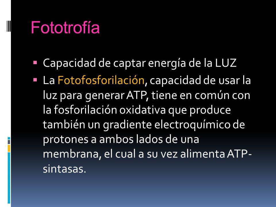 Fototrofía Capacidad de captar energía de la LUZ La Fotofosforilación, capacidad de usar la luz para generar ATP, tiene en común con la fosforilación