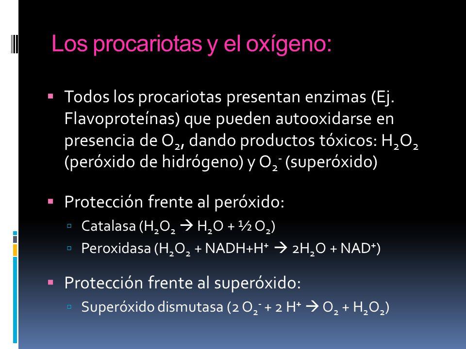 Los procariotas y el oxígeno: Todos los procariotas presentan enzimas (Ej. Flavoproteínas) que pueden autooxidarse en presencia de O 2, dando producto