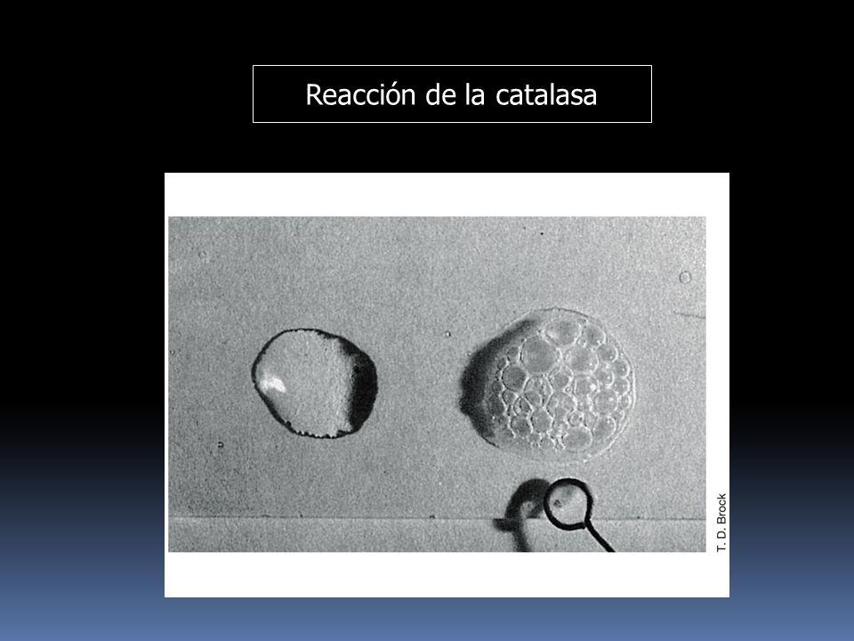 Reacción de la catalasa