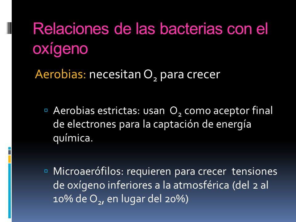 Relaciones de las bacterias con el oxígeno Aerobias: necesitan O 2 para crecer Aerobias estrictas: usan O 2 como aceptor final de electrones para la c