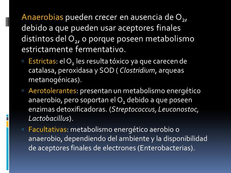 Anaerobias pueden crecer en ausencia de O 2, debido a que pueden usar aceptores finales distintos del O 2, o porque poseen metabolismo estrictamente f
