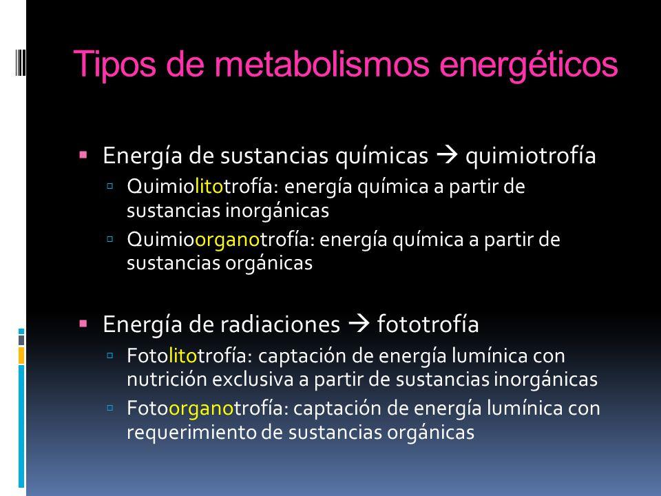 Tipos de metabolismos energéticos Energía de sustancias químicas quimiotrofía Quimiolitotrofía: energía química a partir de sustancias inorgánicas Qui
