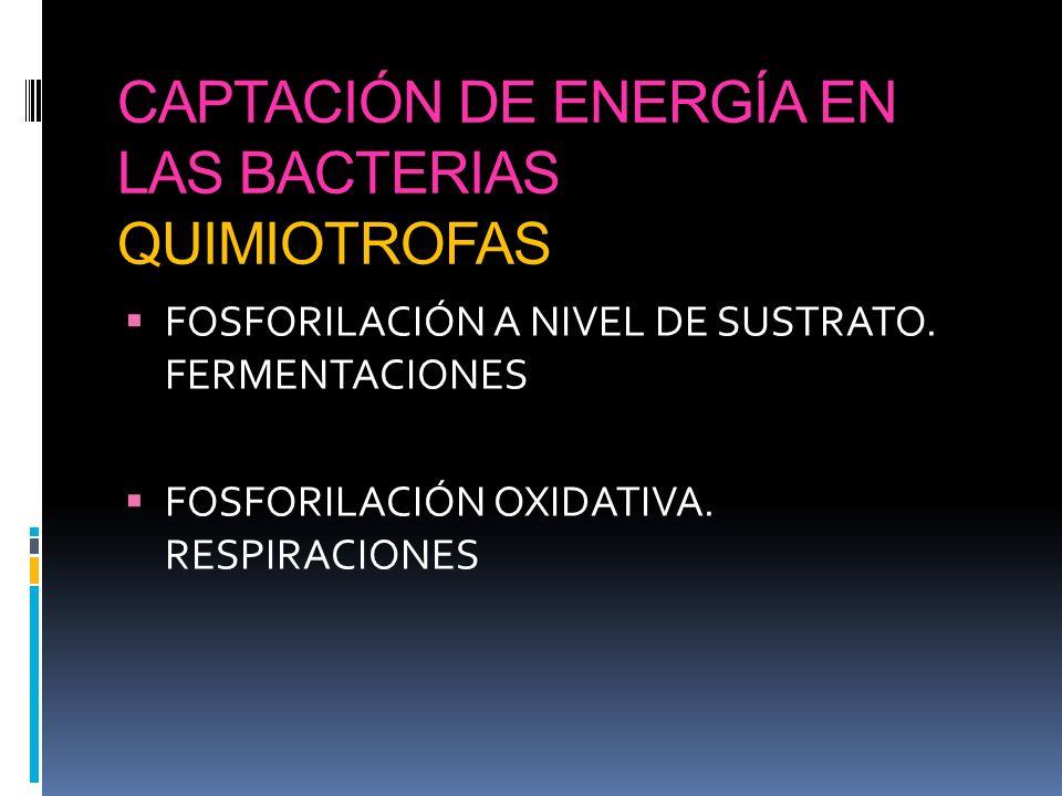 CAPTACIÓN DE ENERGÍA EN LAS BACTERIAS QUIMIOTROFAS FOSFORILACIÓN A NIVEL DE SUSTRATO. FERMENTACIONES FOSFORILACIÓN OXIDATIVA. RESPIRACIONES