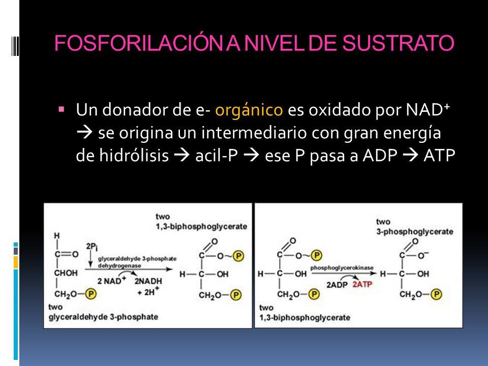 FOSFORILACIÓN A NIVEL DE SUSTRATO Un donador de e- orgánico es oxidado por NAD + se origina un intermediario con gran energía de hidrólisis acil-P ese