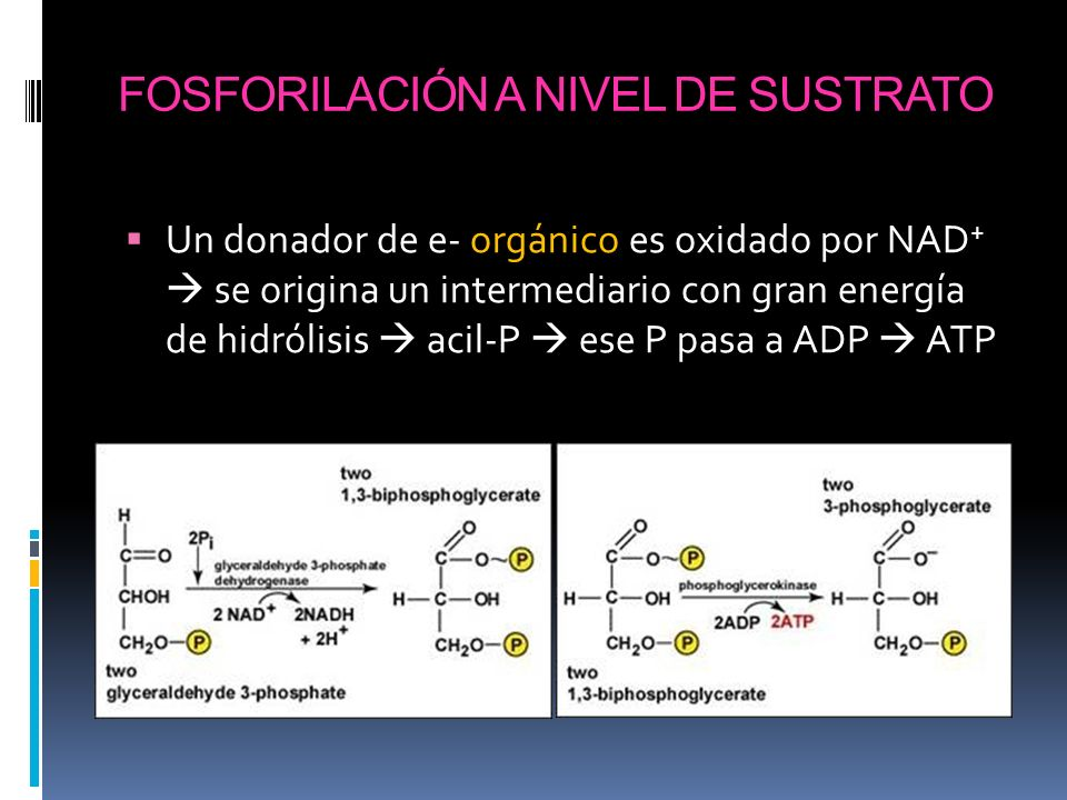 Fosforilación a nivel de sustrato.
