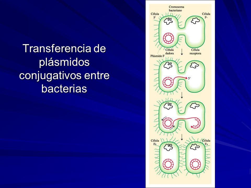 Transferencia de plásmidos conjugativos entre bacterias
