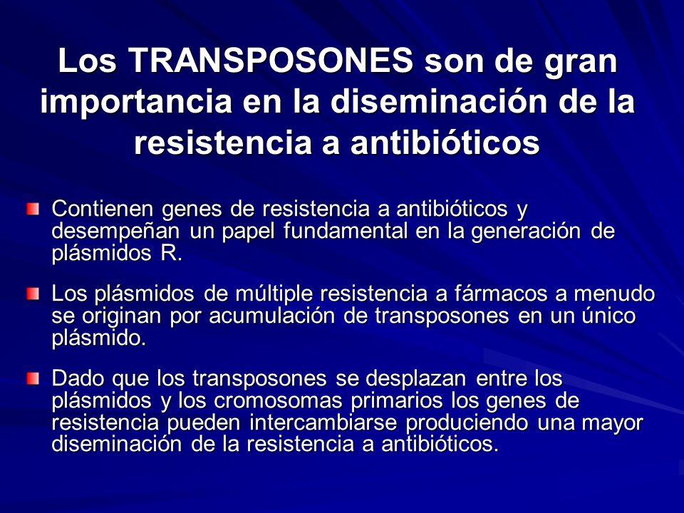 Los TRANSPOSONES son de gran importancia en la diseminación de la resistencia a antibióticos Contienen genes de resistencia a antibióticos y desempeña