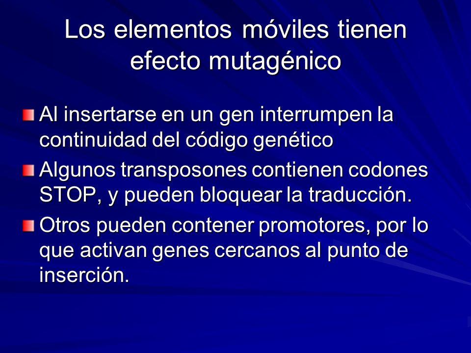 Los elementos móviles tienen efecto mutagénico Al insertarse en un gen interrumpen la continuidad del código genético Algunos transposones contienen c