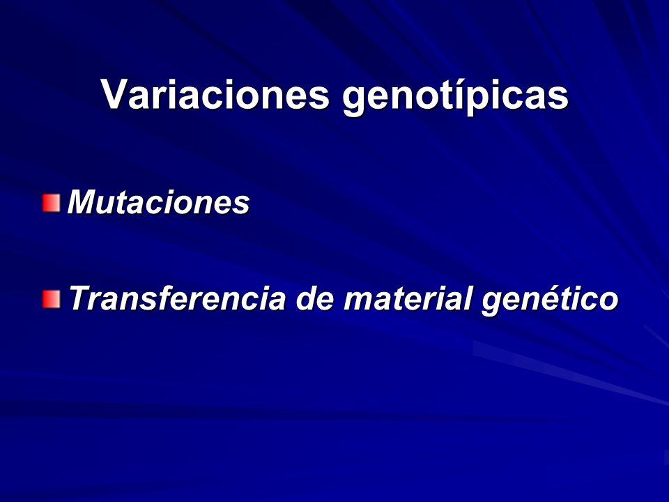 Variaciones genotípicas Mutaciones Transferencia de material genético