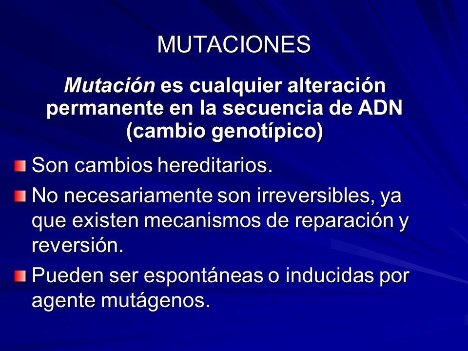 MUTACIONES Son cambios hereditarios. No necesariamente son irreversibles, ya que existen mecanismos de reparación y reversión. Pueden ser espontáneas