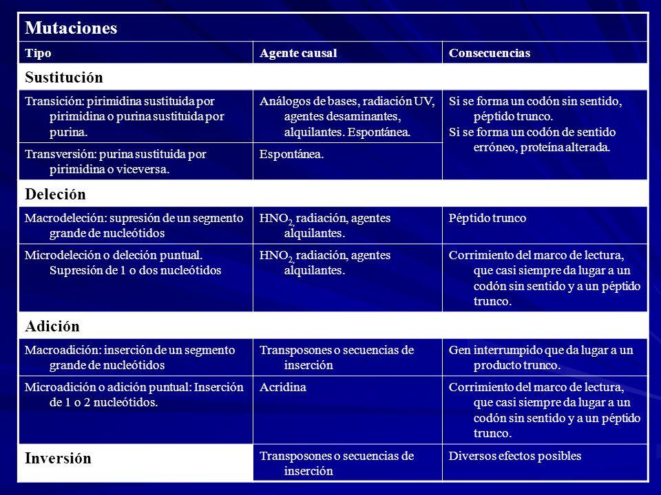 Mutaciones TipoAgente causalConsecuencias Sustitución Transición: pirimidina sustituida por pirimidina o purina sustituida por purina. Análogos de bas