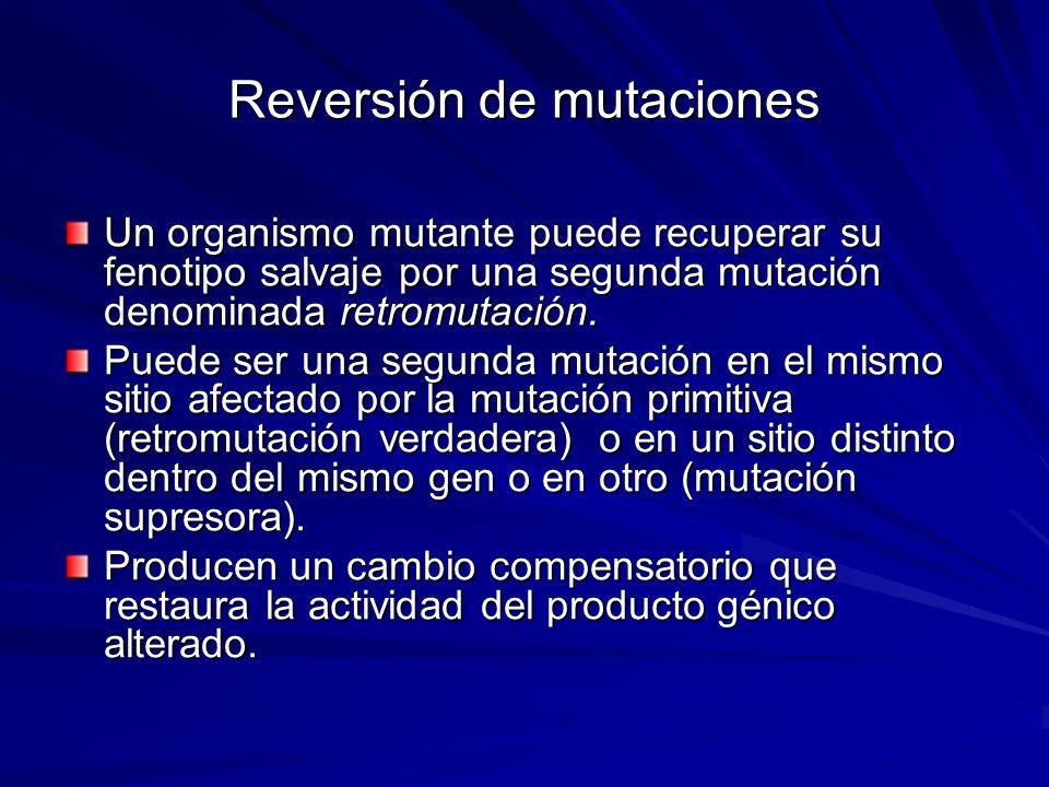 Reversión de mutaciones Un organismo mutante puede recuperar su fenotipo salvaje por una segunda mutación denominada retromutación. Puede ser una segu