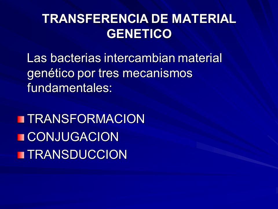 TRANSFERENCIA DE MATERIAL GENETICO Las bacterias intercambian material genético por tres mecanismos fundamentales: Las bacterias intercambian material