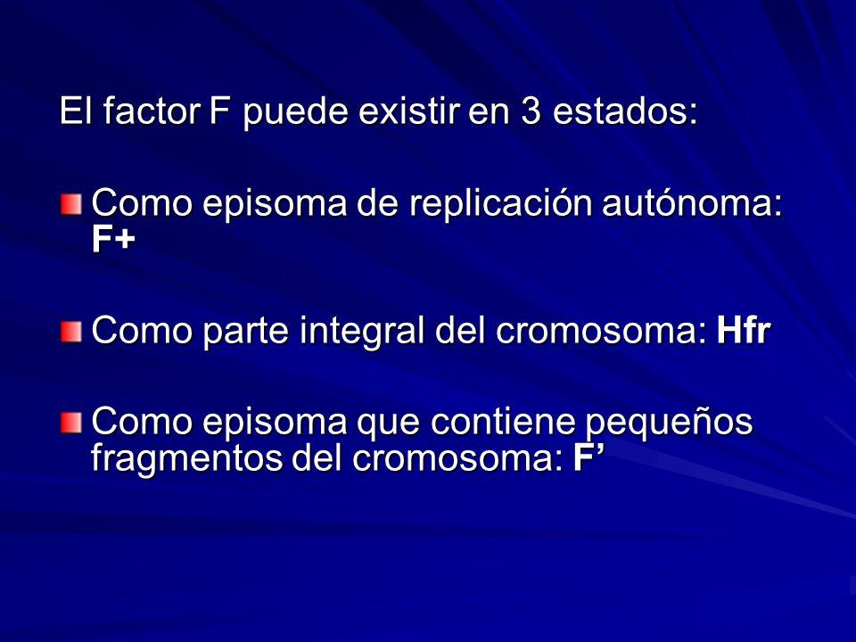 El factor F puede existir en 3 estados: Como episoma de replicación autónoma: F+ Como parte integral del cromosoma: Hfr Como episoma que contiene pequ