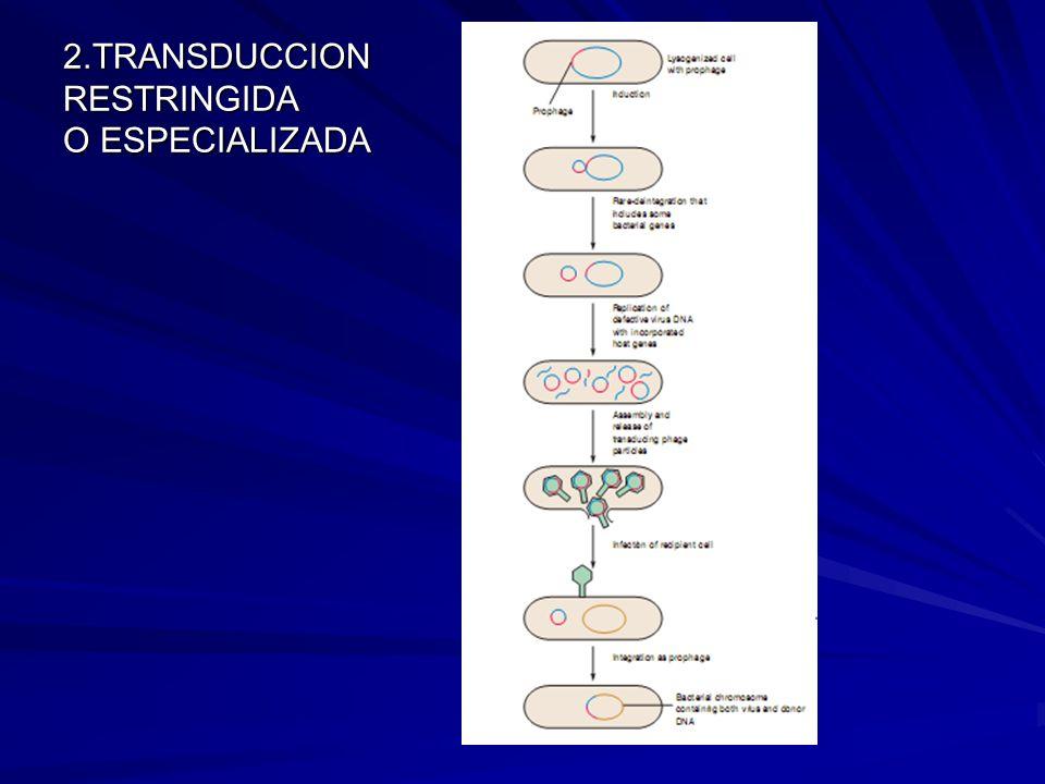 2.TRANSDUCCION RESTRINGIDA O ESPECIALIZADA