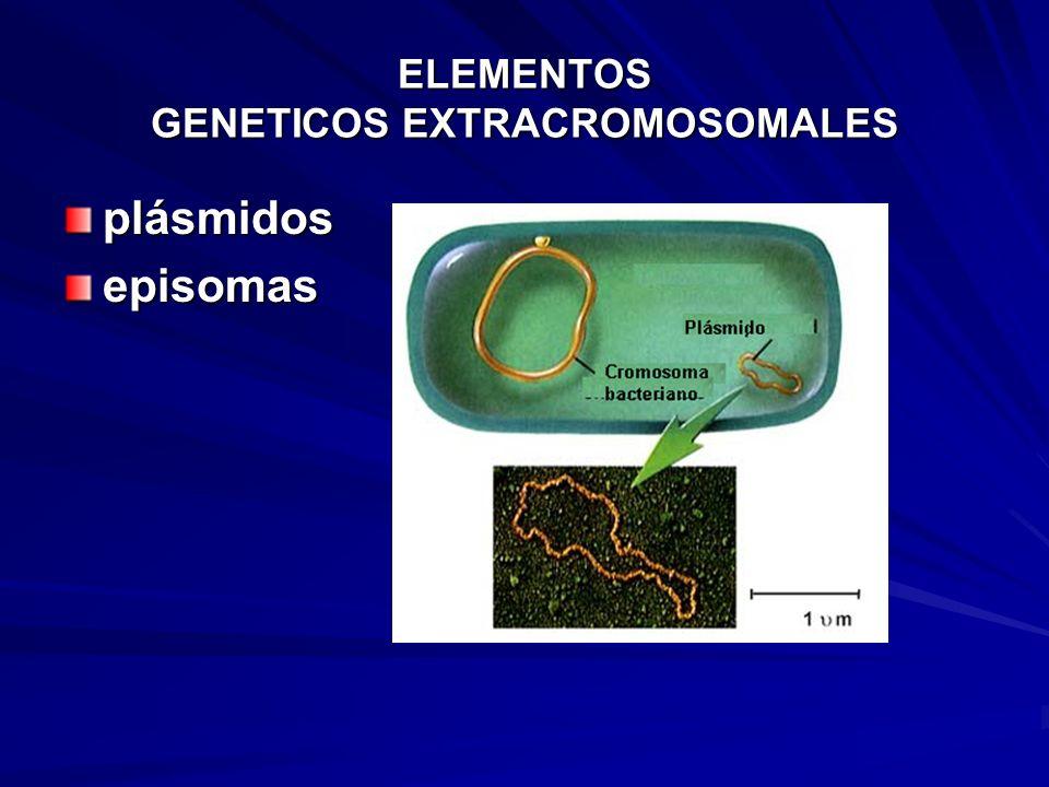 ELEMENTOS GENETICOS EXTRACROMOSOMALES plásmidosepisomas