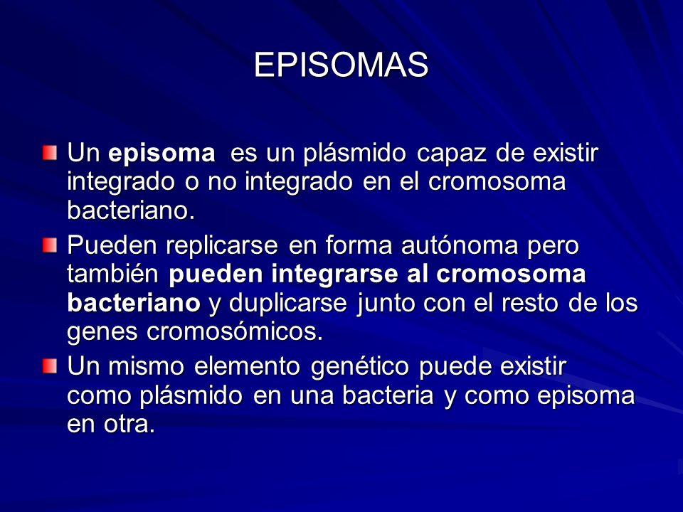 EPISOMAS Un episoma es un plásmido capaz de existir integrado o no integrado en el cromosoma bacteriano. Pueden replicarse en forma autónoma pero tamb