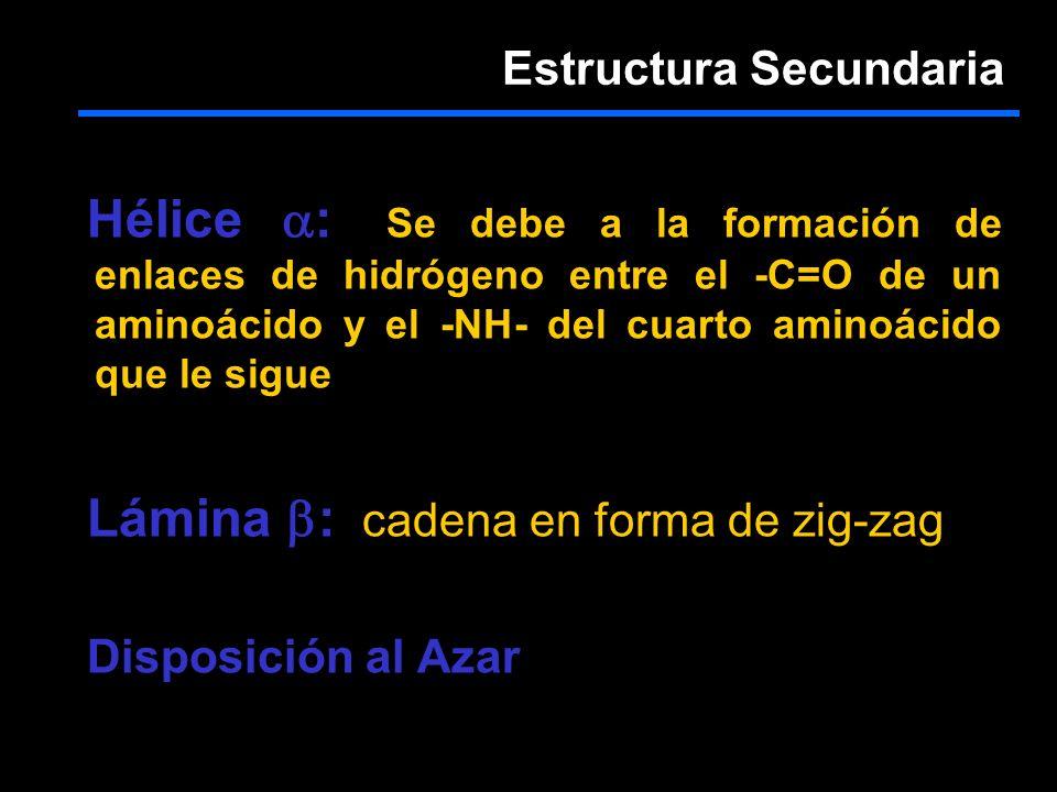 Hélice :: Se debe a la formación de enlaces de hidrógeno entre el -C=O de un aminoácido y el -NH- del cuarto aminoácido que le sigue Lámina :: cadena