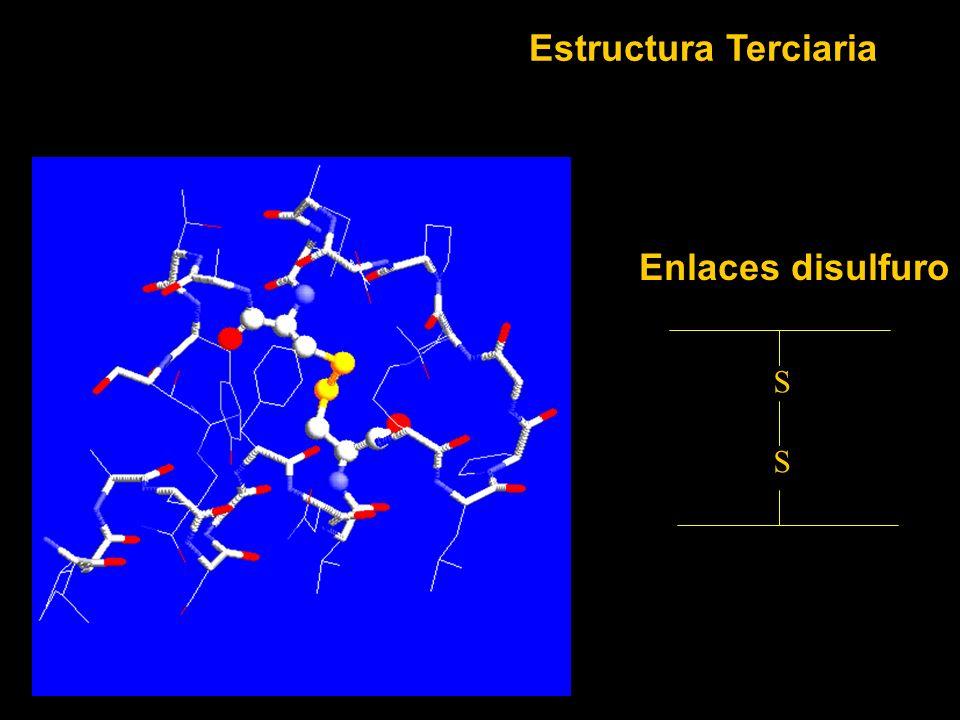 Enlaces disulfuro S S Estructura Terciaria