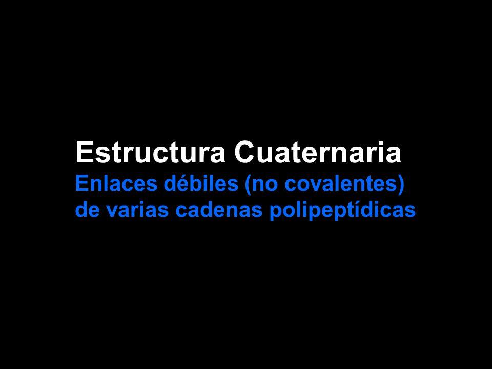 Estructura Cuaternaria Enlaces débiles (no covalentes) de varias cadenas polipeptídicas