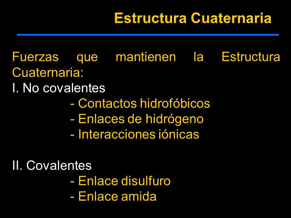 Fuerzas que mantienen la Estructura Cuaternaria: I. No covalentes - Contactos hidrofóbicos - Enlaces de hidrógeno - Interacciones iónicas II. Covalent