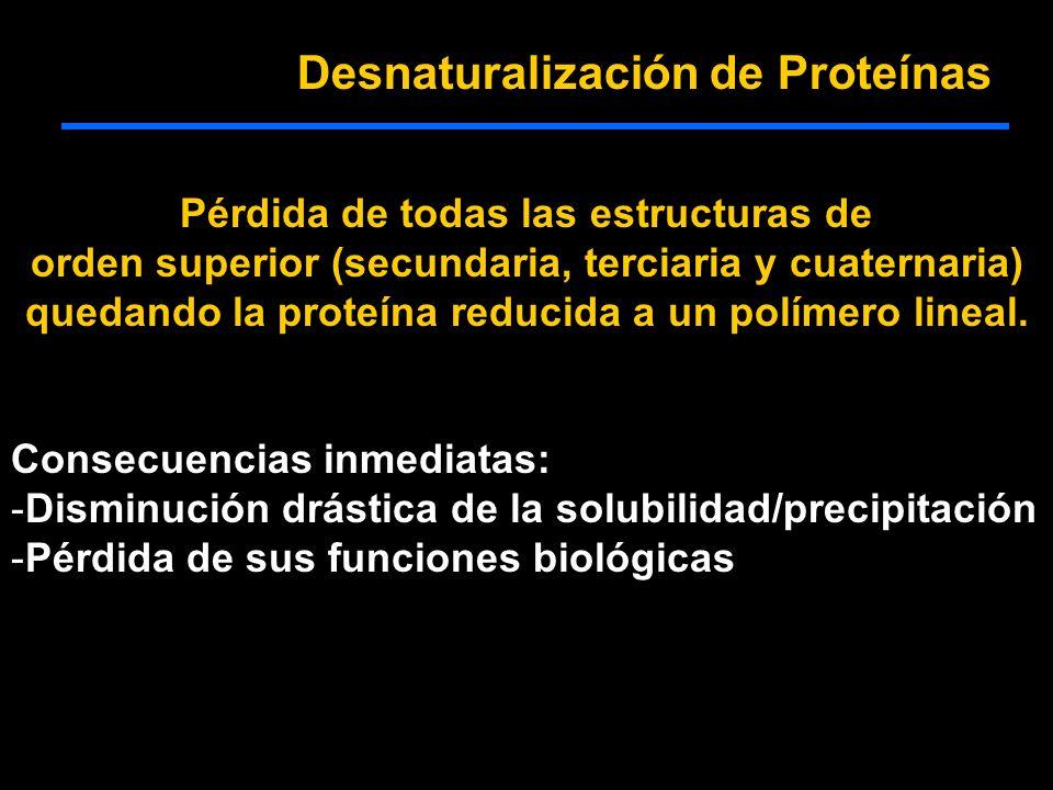 Desnaturalización de Proteínas Pérdida de todas las estructuras de orden superior (secundaria, terciaria y cuaternaria) quedando la proteína reducida a un polímero lineal.