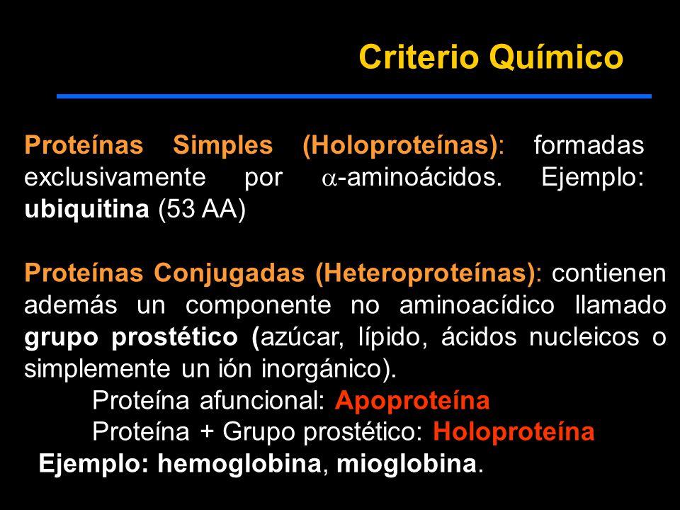 Criterio Químico Proteínas Simples (Holoproteínas): formadas exclusivamente por -aminoácidos. Ejemplo: ubiquitina (53 AA) Proteínas Conjugadas (Hetero