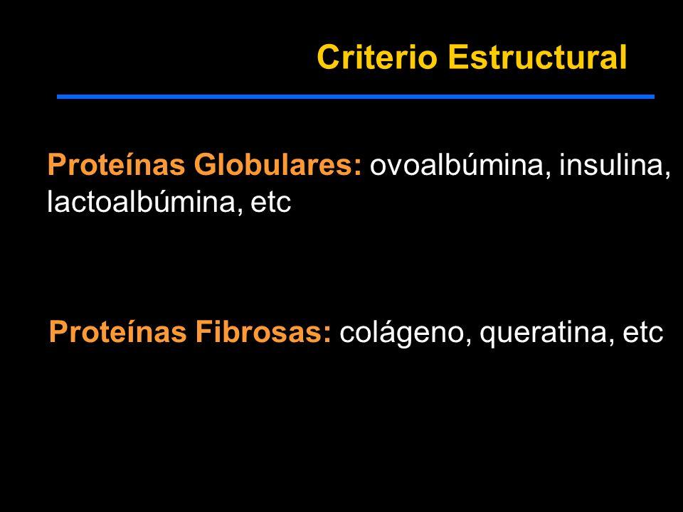 Criterio Estructural Proteínas Globulares: ovoalbúmina, insulina, lactoalbúmina, etc Proteínas Fibrosas: colágeno, queratina, etc
