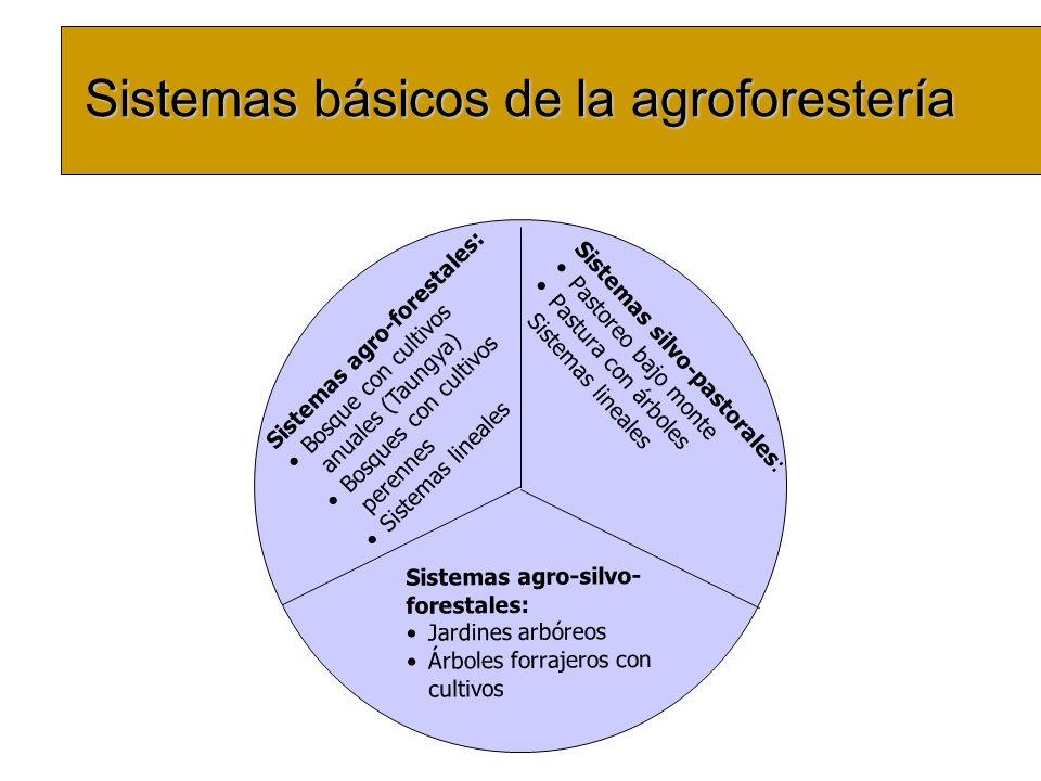 Sistemas básicos de la agroforestería Sistemas agro-forestales: Bosque con cultivos anuales (Taungya) Bosques con cultivos perennes Sistemas lineales