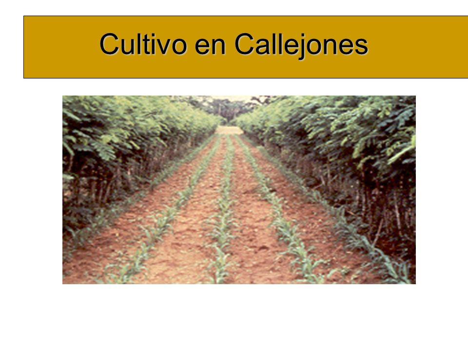 Cultivo en Callejones